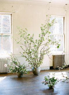 flowering branches via magnolia rouge