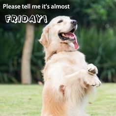 Please tell me it's almost Friday!