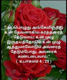 Bible Words Images, Tamil Bible Words, Word Of The Day, Word Of God, Tamil Bible Study, Bible Quotes, Bible Verses, Tamil Christian, Jesus Photo