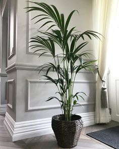 Home Buying Tips To Help You Along The Way. Big Indoor Plants, Big Plants, White Plants, Home Buying Tips, Home Ownership, Easy Home Decor, Home Look, Home Improvement Projects, House Design
