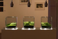 Another nano triptych aquascape... love how clean and modern this looks, like art in a gallery