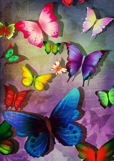 Mariposas coloridas | Colorful butterflies