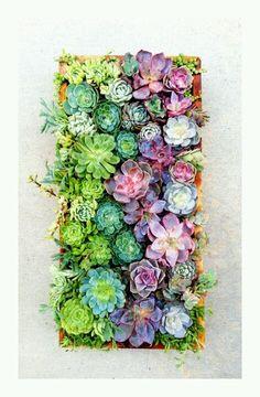 Colourful cacti
