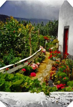 Azores... Can you imagine this is someone's path to their door :))