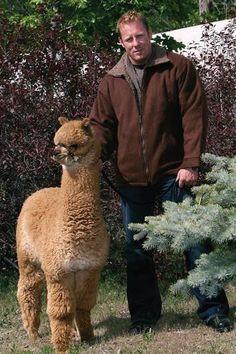 Alpaca Barn Jacket