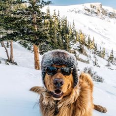 Pin for Later: Aspen the Mountain Pup Travels to Beautiful Places and Looks SO Majestic Doing It