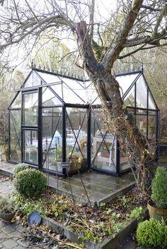 #greenhouse #glashus #Orangery