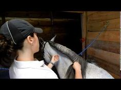 How To Running Braid & French Braid your horse for schooling - FULL TUTORIAL - YouTube