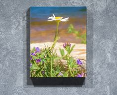 This beach daisy is a beautiful nature art print for blue bathroom decor. Feel like you're relaxing on the shore with this canvas lake print. Shop for blue canvas wall art now at www.rogueauroraphotography.com/wall-art-shop/beach-daisy or pin to save for later. Norse Goddess, Goddess Of Love, Blue Canvas, Canvas Wall Art, Nature Prints, Art Prints, Blue Bathroom Decor, Beautiful Baby Shower, Daisy