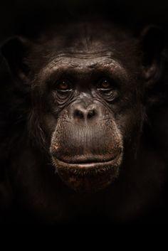 Primates, Mammals, Animals And Pets, Baby Animals, Cute Animals, Most Beautiful Animals, Beautiful Creatures, Regard Animal, Mundo Animal