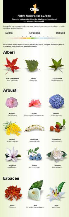 Le più comuni piante acidofile da giardino