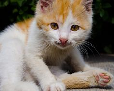 Her cute look Kitty, Cats, Photography, Animals, Little Kitty, Gatos, Photograph, Animales, Animaux