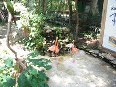 Florida, Silver Springs Flamingos.