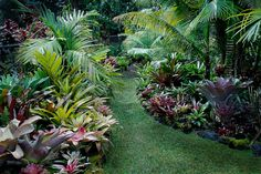 Bromeliad garden filled exclusively with unusual and rare bromeliad plants.