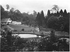 Botanische tuin te Cibodas, Java, Indonesië (1919-1930)