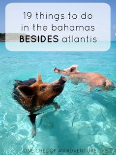 19 Things To Do in The Bahamas... Besides Atlantis Resort | One Chel of an Adventure