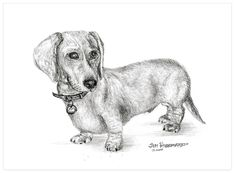 adorable doxie drawing