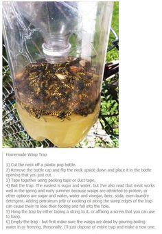 Kill wasps