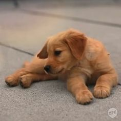 And if you're ever feeling down, you can just watch her chasing bubbles and cheer right up. | Winnie The Puppy Will Fix Everything.