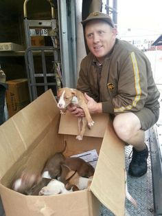 UPS driver hears a box of puppies crying...left in the grass and pouring rain so he puts them on his truck to save them. The puppies are safe and sound photo cedit Villabos Center