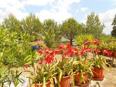 Beauriful Gardens in Little Paradise Zen, Planer, Paradise, Villa, Gardens, Tree Structure, Outdoor Gardens, Fork, Villas