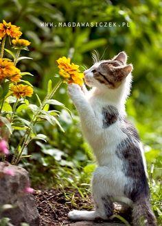 Sniff !!! ... ahhh , qué lindo perfume !!!