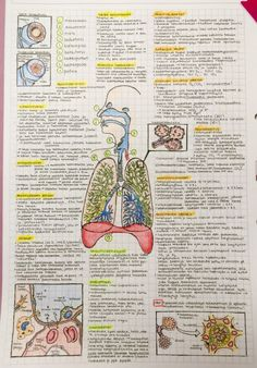 raspstudying:  25.4.2015 - Respiratory system. I hope you enjoy this one too. :) Im starting to get stressed but these notes are a good way of relaxing and learning at the same time. Drawing seems to relax me. Have a good night everyone!