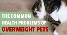 Dogs and cats end up with many different serious health conditions related to overweight, the most common are arthritis and bladder or urinary tract disease. http://healthypets.mercola.com/sites/healthypets/archive/2016/12/31/serious-health-conditions-related-to-pet-obesity.aspx