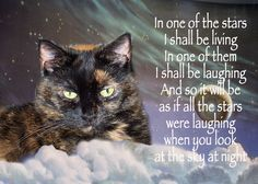 cat loss quotes | Displaying 20> Images For - Sympathy Quotes For Loss Of A Child...