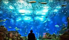 BIONI VIAJANDO POR AÍ!: DICA DO DIA: OCEANÓGRAFO DE LISBOA