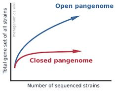 Pangenome - Metagenomics Bacillus Anthracis, Next Generation Sequencing, Genome Sequencing