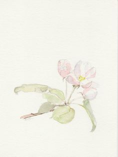 Spring watercolor, Apple blossom, Original Watercolor painting, Still life  painting, watercolor painting art. via Etsy