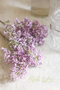 Pink Lilac|Enjoy the Little Things