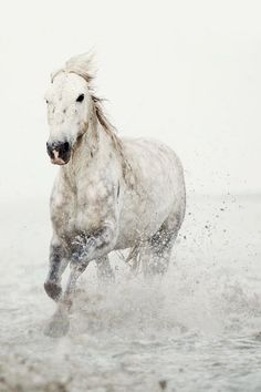 Photographed in the Camargue region of France, a solitary wild white horse runs through ocean water. https://www.etsy.com/listing/77348153/modern-nature-photography-minimalist-art