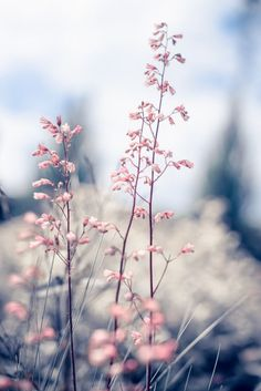 Vintage beautiful vintage flowers at sunrise Premium Photo – Photography Flor Iphone Wallpaper, Natur Wallpaper, Pastel Wallpaper, Flower Wallpaper, Wallpaper Backgrounds, Beautiful Flowers, Beautiful Pictures, Image Nature, Flower Aesthetic