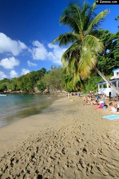 Anse Dufour - Martinique   RePinned by : www.powercouplelife.com