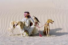 saluki | Salukis: Erhabene Hunde - manager magazin