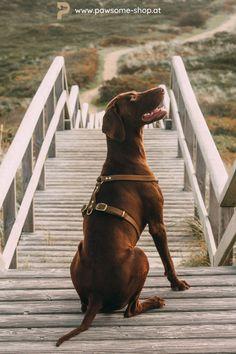 Verrate uns die Maße deines Hundes und wir fertigen von Hand das perfekte Geschirr für ihn an. Pawsome | Hund Geschirr | handmade | dog Cute Dogs Breeds, Cute Dogs And Puppies, I Love Dogs, Dog Breeds, Cute Puppy Videos, Dog Grooming, Dog Lovers, Labrador Retriever, Wallpaper