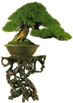 I love this Bonsai stand! Bonsai Art, Bonsai Plants, Bonsai Trees, Bonsai Garden, Bonsai Meaning, Bonsai Tree Types, Miniature Trees, Potted Trees, Growing Tree