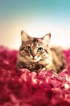 kitty <3 meow