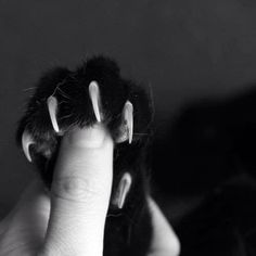 """""""""""Cats keep their claws sharp because they know a purr might not be enough."""" --Author Unknown"""