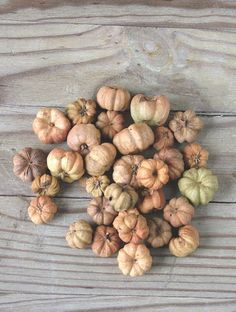 Remek őszi díszítő termés: mini tök formájú natúr száraz termés.