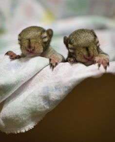 baby squirrels are so adorable, I can't even explain how much I love them.