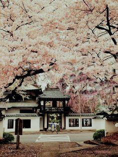 Templo Shouonji en Sendai, Japón me enamora