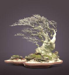 Start Day How to Grow a Bonsai Tree - Gardening Art Ficus Bonsai, Indoor Bonsai Tree, Bonsai Plants, Bonsai Garden, Juniper Bonsai, Bonsai Artificial, Dwarf Trees, Bonsai Styles, Miniature Trees