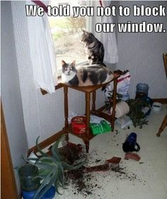 """Cute Animals - Cats - """"This image was actually a request from a recent cat who couldn't see out the home's large window. Make sure your cats have a view. It's their version of reality TV"""". :)  ~ Professional Pet Psychic and Animal Communicator Denise - Click to Get Your Pet Questions Answered Today."""