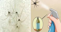 Un articol de Petrut  Oricat ai fi de curajos, invaziile de paianjeni si alte taratoare nu sunt deloc placute. Ori suprainmultirea acestor insecte este foarte probabila daca locuiesti la casa si mai ai si o livada prin apropiere.  Uneori nici spray-urile insecticide din comert nu extermina aceste invazii, asa ca iata o serie … Abstract, Artwork, Recipies, Plant, Summary, Recipes, Work Of Art, Auguste Rodin Artwork, Artworks