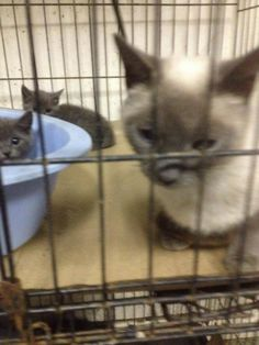 LEILANI & 2 KITTENS HAVE BEEN RESCUED !! THE 671ST, 672ND & 673RD CATS RESCUED FROM CCAC IN 2015  2 JUL @2PM ET - PULLED FOR RESCUE BY CAT ADOPTION TEAM, WILMINGTON, FOR FOSTER CARE