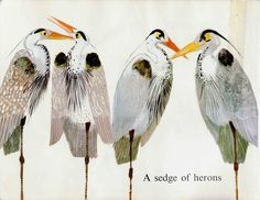 Illustrations for 'Birds by Brian Wildsmith' - Quora