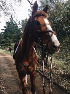 Cute Horses, Pretty Horses, Horse Love, Beautiful Horses, Animals Beautiful, Cute Baby Animals, Animals And Pets, Pet Safe, Horse Girl